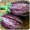 Eggplant - Graffiti