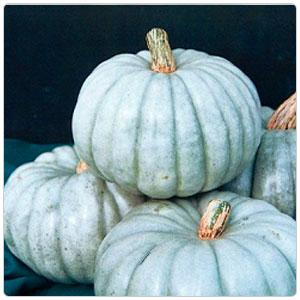 Pumpkin - Jarrahdale