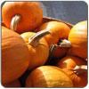 Squash - Sugar Pie Pumpkin