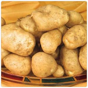 Yellow Finn Potato